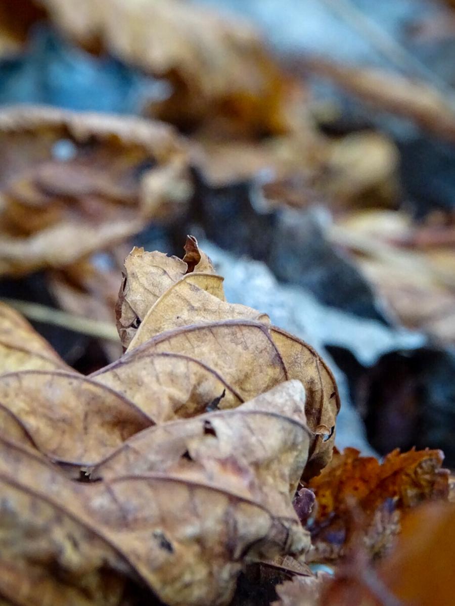 Wintertijd in de Herfst